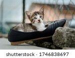 Little Kitten In The Black Shoe ...