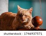 An Orange Cat Lies On A Fence