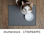 Tabby Cat Sitting In Front Of A ...
