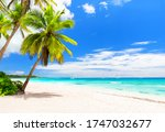 coconut palm trees on white... | Shutterstock . vector #1747032677