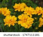 Beautifil Yellow Sunray...
