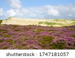 The Shifting Dunes And Purple...