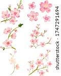 branch of cherry blossom on... | Shutterstock .eps vector #1747291694