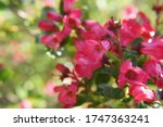 Magnificent petals of pink color. Beautiful small flowers in the sensational colors. The nature is magnificent. Beautiful small flowers which represent the beauty of the nature.