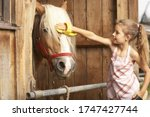 Young Girl Brushing Horse\'s Hair