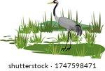 common crane or grus communis...   Shutterstock .eps vector #1747598471