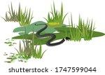 grass snake or natrix natrix in ... | Shutterstock .eps vector #1747599044