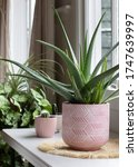 Indoor House Pot Plants ....