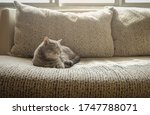 grey cat short hair sleeping on ... | Shutterstock . vector #1747788071