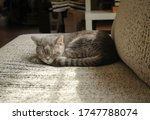 grey cat short hair sleeping on ... | Shutterstock . vector #1747788074