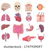 internal human anatomy organ... | Shutterstock .eps vector #1747939097