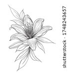hand drawn lily flower  bud and ... | Shutterstock .eps vector #1748243657