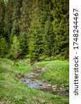 Coniferous Forest And Brook In...