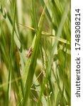 A Grasshopper Clinging Onto A...