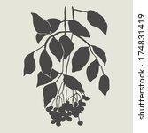 sprig with berries | Shutterstock .eps vector #174831419