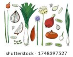vegetable vector sketch. a set... | Shutterstock .eps vector #1748397527