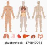Human Anatomy Of Man Background