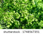 Summer green tree foliage...