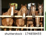 Young And Beautiful Horses In ...