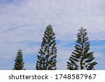 pine tree and beautiful sky... | Shutterstock . vector #1748587967