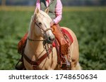 Horse Western Palomino With...