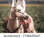 Western Horse In Portraits With ...