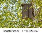 A Bird House In The Sun Among...