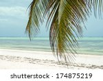 palm leaf and tropical beach | Shutterstock . vector #174875219