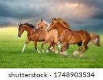 Horse Herd Run Gallop On Spring ...