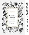 vintage medicinal herbs card or ... | Shutterstock .eps vector #1748938367