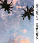 Two Coconut Trees Against The...