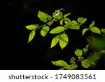 green leaves on a tree branch | Shutterstock . vector #1749083561
