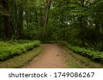 road leading to the forest | Shutterstock . vector #1749086267