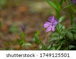 small purple flower in the... | Shutterstock . vector #1749125501