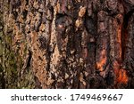 Decorative Texture Of Bark And...
