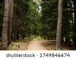 road leading to the forest | Shutterstock . vector #1749846674