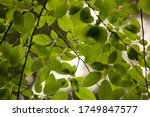 natural green background with... | Shutterstock . vector #1749847577