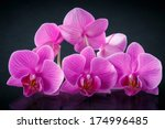 beautiful branch phalaenopsis... | Shutterstock . vector #174996485