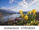 Narcissus  Mountain And Lake
