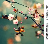 beautiful flowering japanese... | Shutterstock . vector #175018784