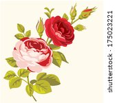 vintage decorative roses.... | Shutterstock .eps vector #175023221