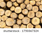 Poplar Logs Cut And Stacked....