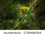 Green Parrot Great Green Macaw...