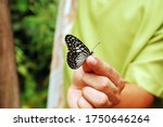 Bohol  Ph   Sept 1   Butterfly...