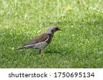 Small Starling Bird On The...
