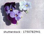 Three Viola Flowers Floating I...