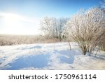 Birch and other deciduous trees on the snow-covered hill after a blizzard. Snowflakes, pure morning sunlight through the tree trunks. Clear blue sky. Winter wonderland. Idyllic winter scene. Finland