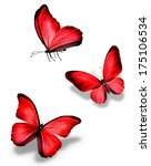 Three Red Butterfly  Isolated...
