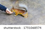 A Squirrel Eats A Treat From A ...