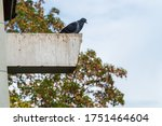 Feral Pigeon Sitting On The...